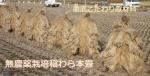 無農薬栽培稲わら本畳